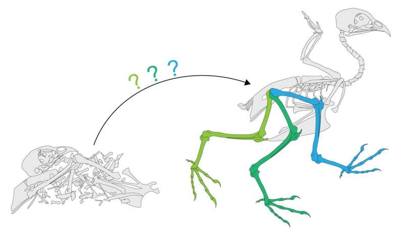 Study casts doubt on traditional view of pterosaur flight