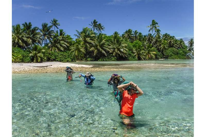 Study shows 5,000 percent increase in native trees on rat-free Palmyra Atoll