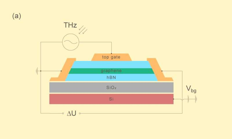 The dispute about the origins of terahertz photoresponse in graphene results in a draw