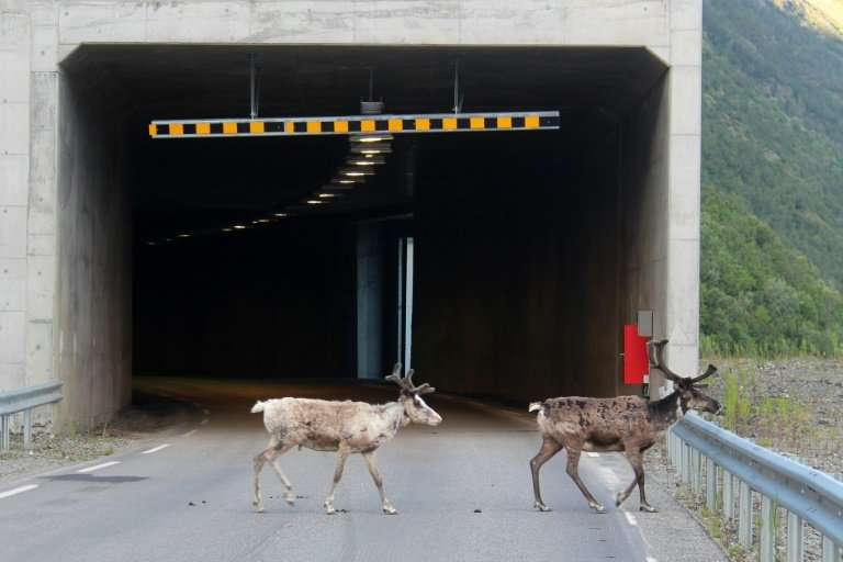 The Norwegian Public Roads Administration said no serious accidents involving animals have been reported yet but described the s