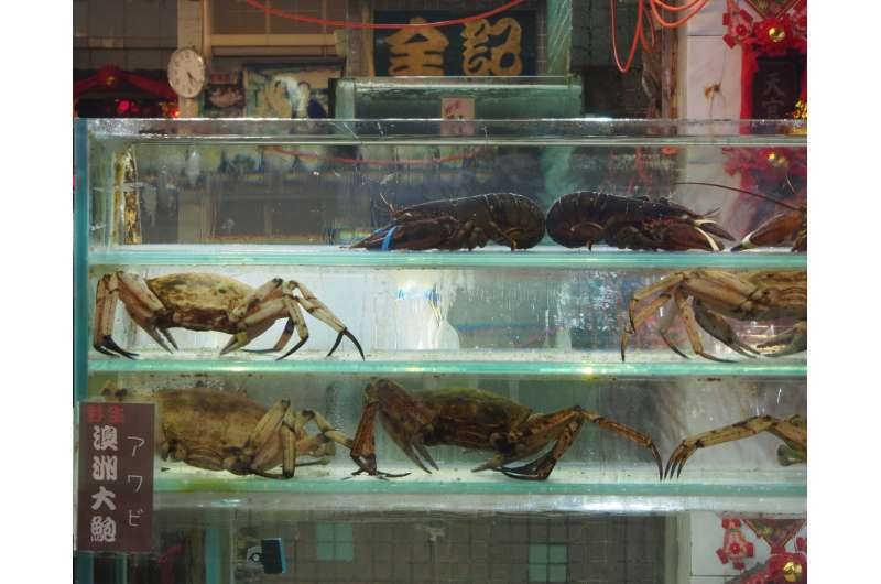 The secret life of lobster (trade): Could we be in hot water?