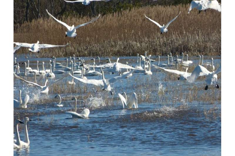 The Trump administration's new migratory bird policy undermines a century of conservation