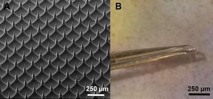 Tiny, pain free vaccinations—microneedles and nanoparticles
