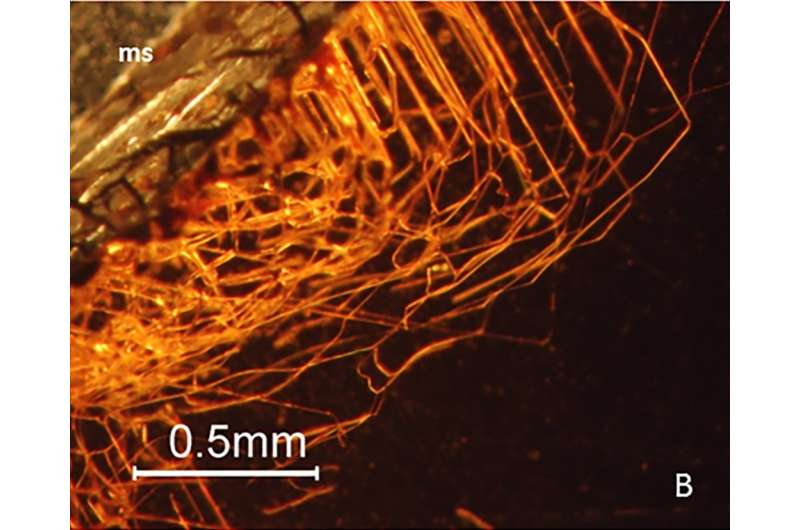 Tiny tunnels inside garnets appear to be the result of boring microorganisms