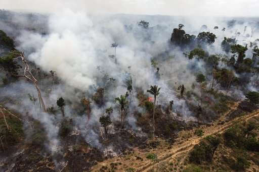 Tropical forests see high loss of tree cover for 2nd year
