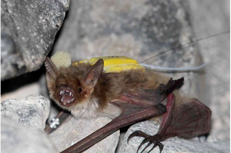 Unpredictable food sources drive some bats to cooperatively search for food