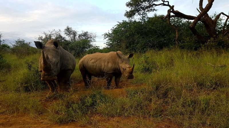 Using artificial intelligence to investigate illegal wildlife trade on social media
