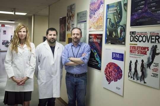 UVA identifies brain's lymphatic vessels as new avenue to treat multiple sclerosis