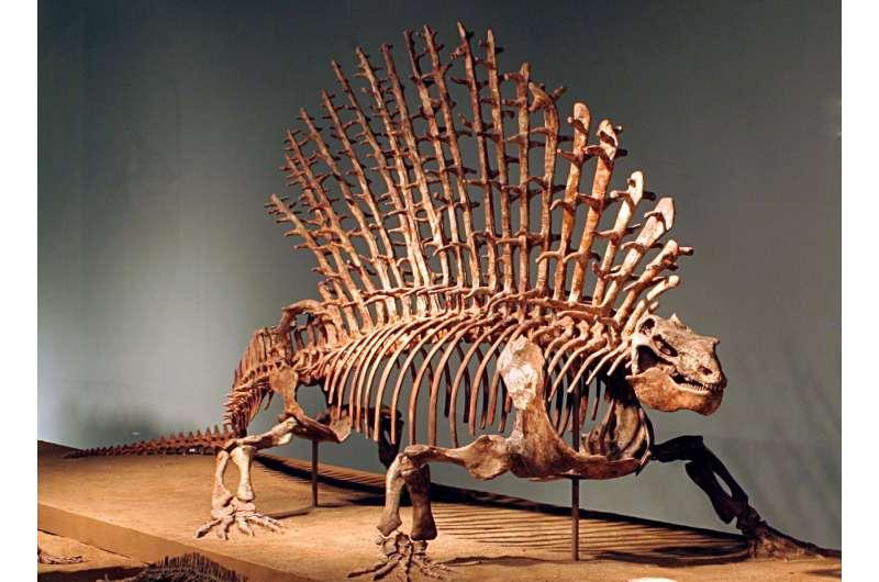 When mammal ancestors evolved flexible shoulders, their backbones changed too