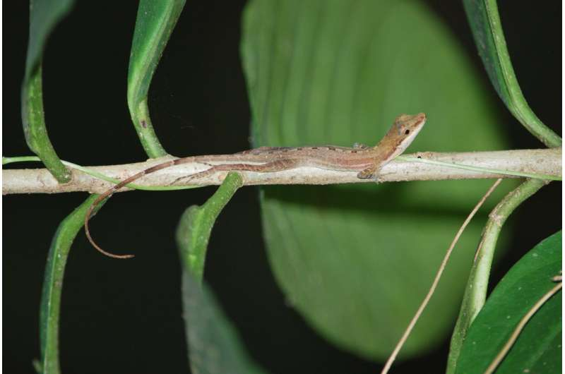Why are there so many types of lizards?