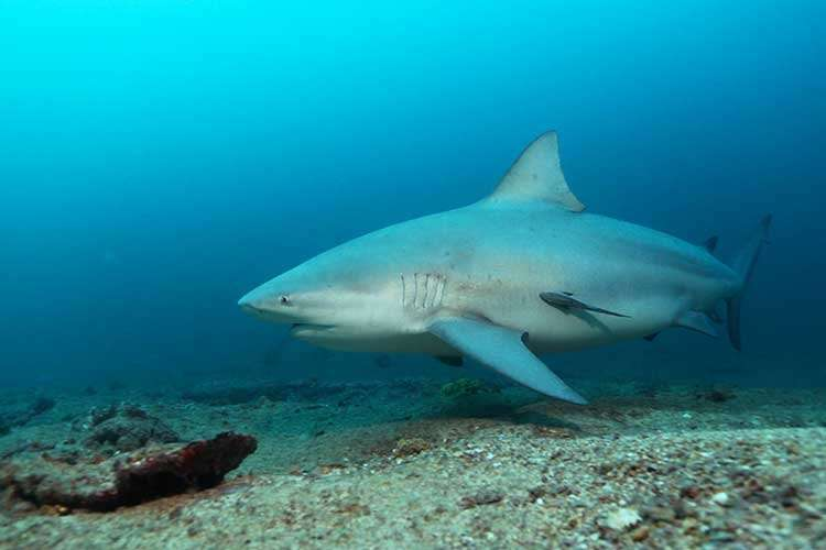 Why has this tiny island seen a sharp rise in shark bites?