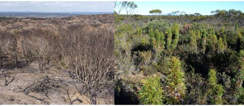 Why we are measuring the health of Australian vegetation poorly
