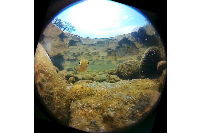 Zebrafish's near 360 degree UV-vision knocks stripes off Google Street View