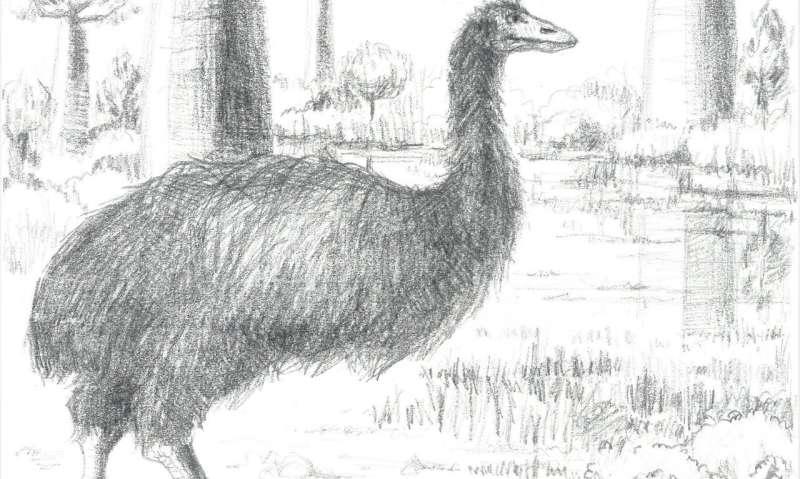 ZSL names world's largest ever bird -- Vorombe titan