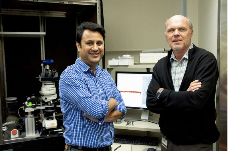 Scientists solve century-old neuroscience mystery; answers may lead to epilepsy treatment