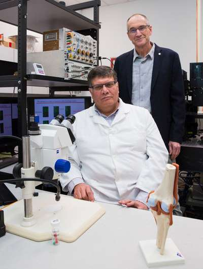 Researchers watch the knee degenerate and understand how osteoarthritis may begin