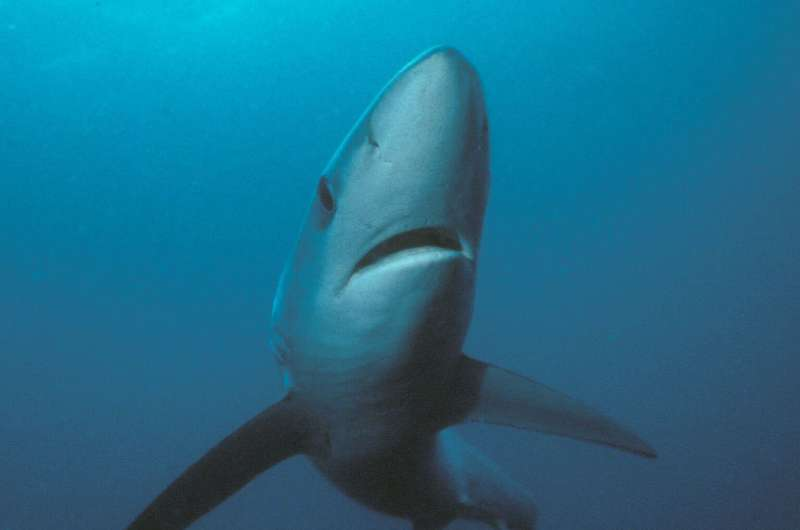 Researchers demonstrate shark vertebral band pairs are related to growth, not time