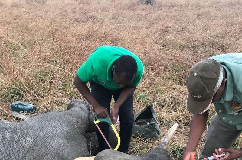 13 adult elephants to be collared in Mikumi and Selous Tanzania