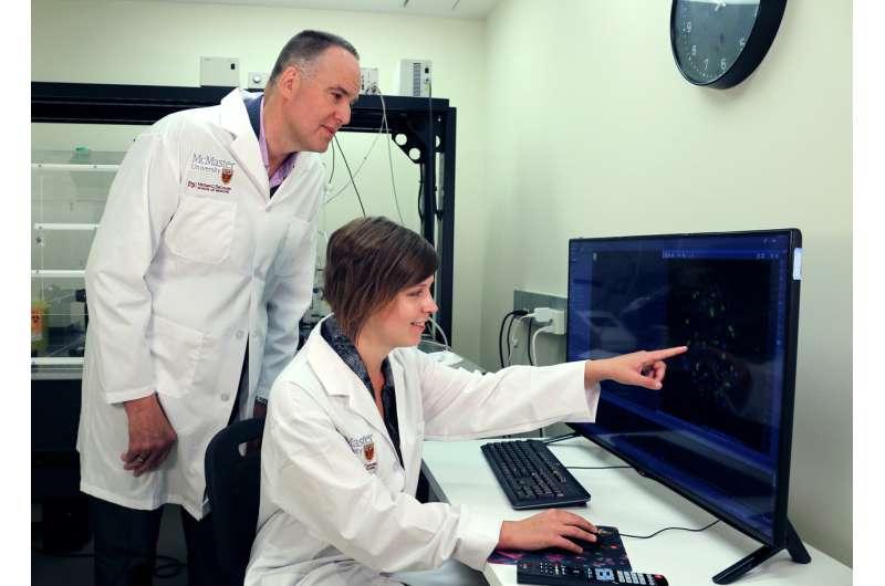New insight into Huntington's disease may open door to drug development