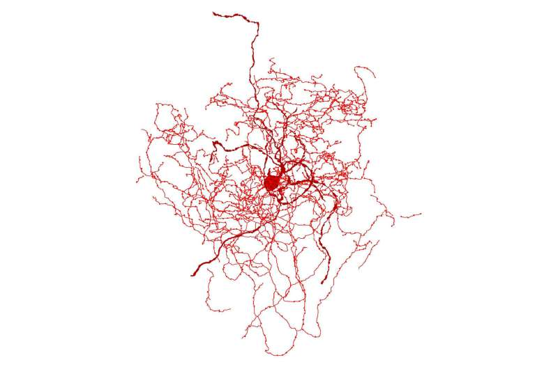 Scientists identify a new kind of human brain cell