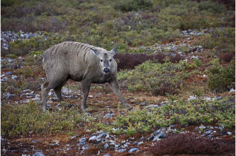 Conservation biologist goes to ends of the earth to save little-known species