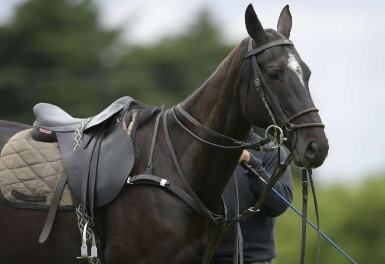 Scientists want to map the entire genome of the Argentine polo horse in order to create the perfect specimen