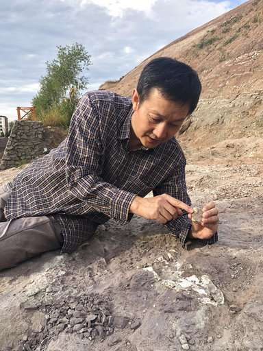 China building boom uncovers buried dinosaurs, makes a star