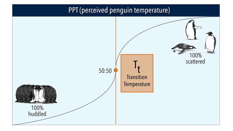Are emperor penguins eating enough? Scientists gauge foraging success by spying with time-lapse video