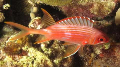 Bigger eyes but reduced brain power in nocturnal fishes