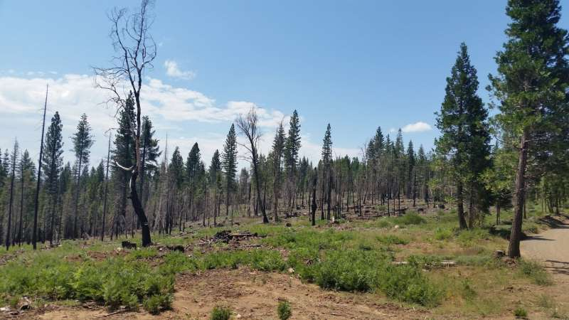 Billions of gallons of water saved by thinning forests