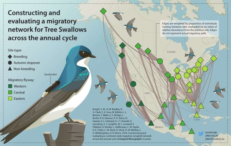 Birds wearing backpacks trace a path to conservation