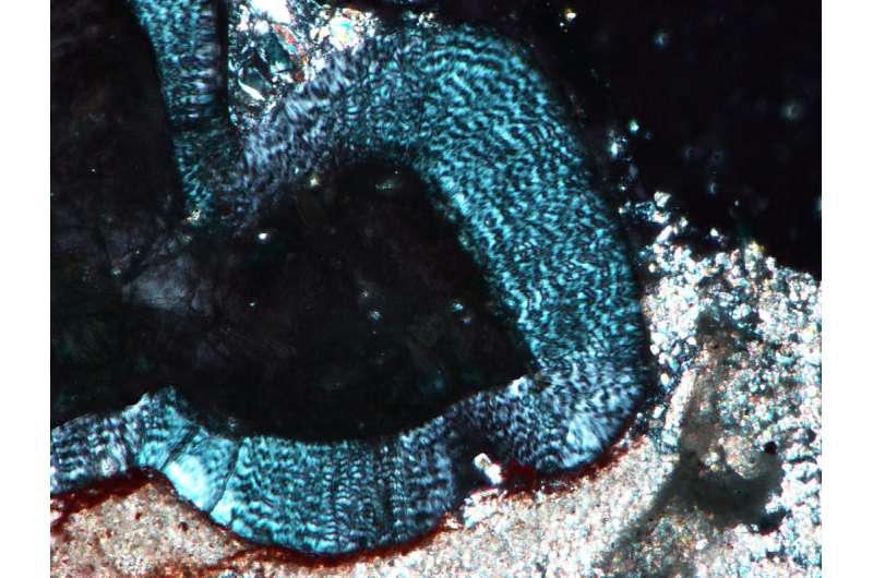Chew on this: Two new studies reveal secrets of early dinosaur and mammal tooth evolution