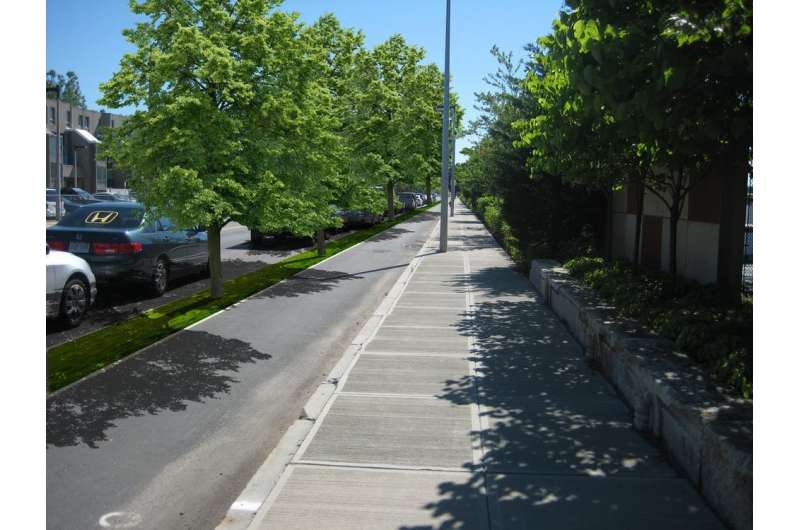 Designing greener streets starts with finding room for bicycles and trees