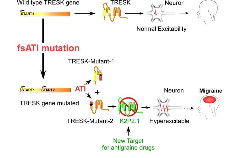 Discovery of novel mechanisms that cause migraines