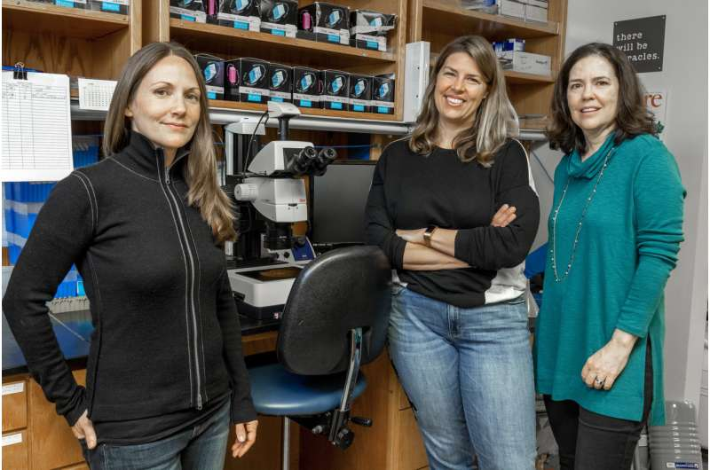 Ebola virus experts discover powerful, new approach for future therapeutics