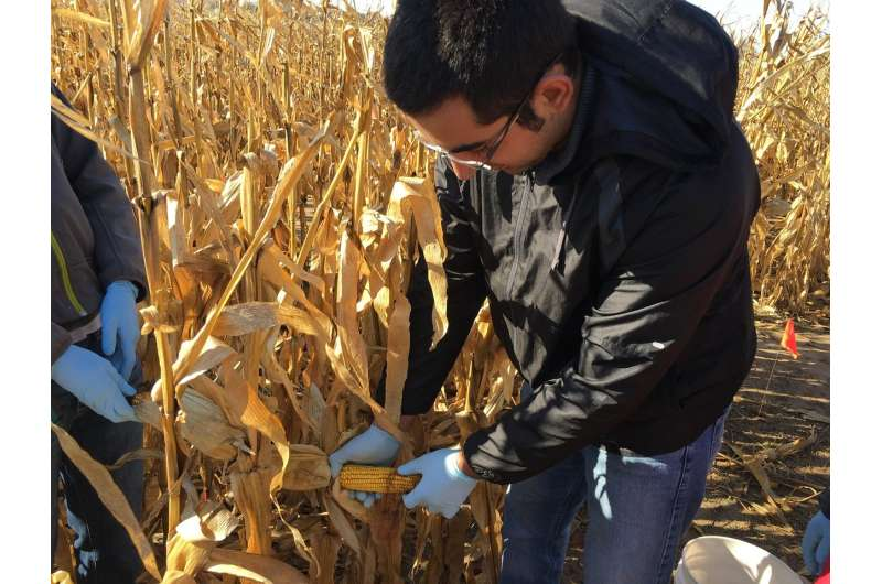 Fertilizers' impact on soil health compared