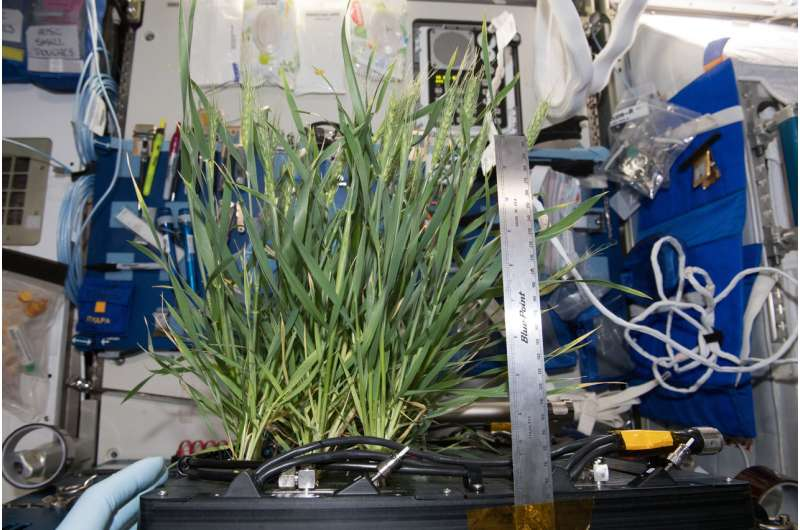 Giving roots and shoots their space: The Advanced Plant Habitat