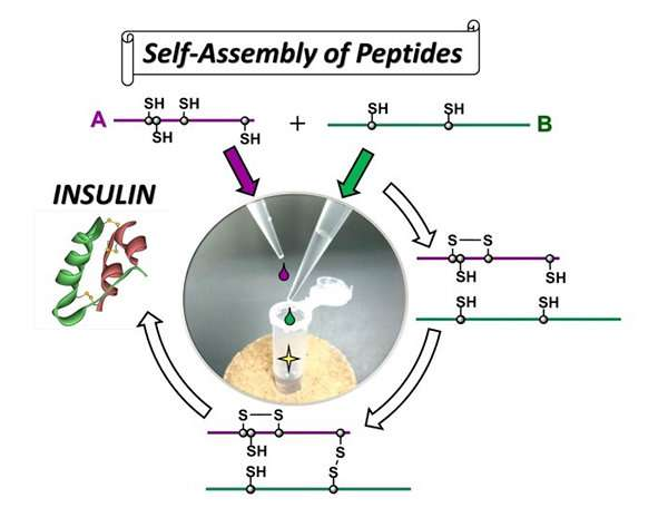 High efficiency synthesis of insulin by self-assembly based organic chemistry