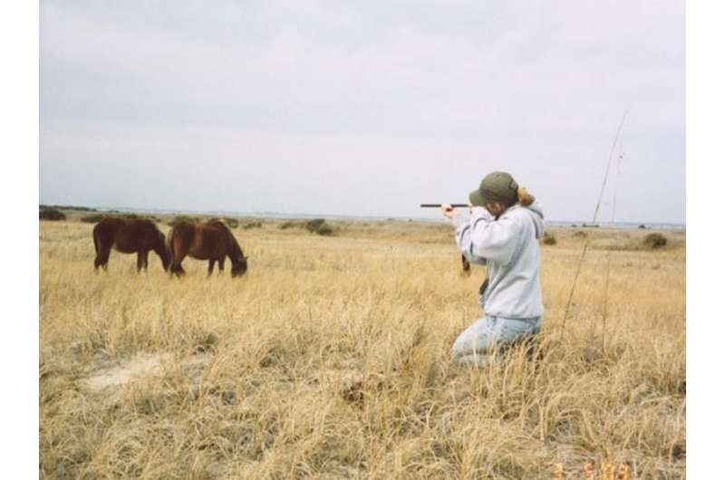 Hold your horses – feral horse fertility control isn't that easy