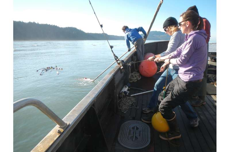 How the Elwha dam removals changed the river's mouth