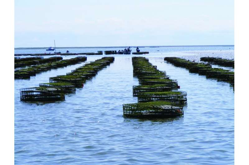 Hurricanes and water wars threaten the Gulf Coast's new high-end oyster industry