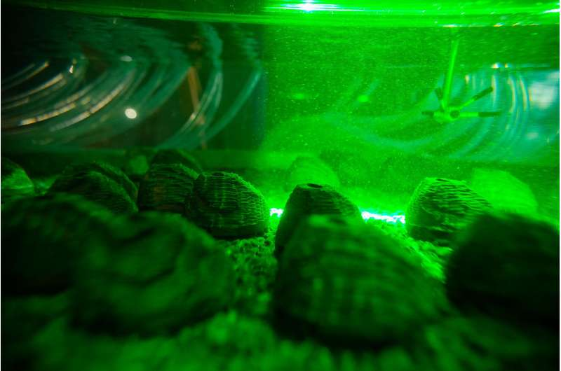 Imperiled, some freshwater mussels endure. How?