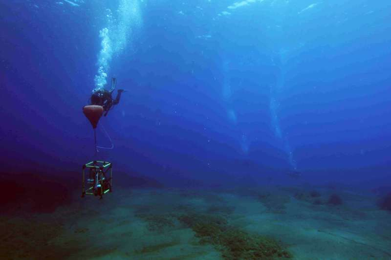 Influence of carbon dioxide leakage on the seabed