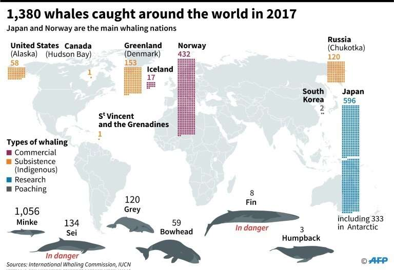 Major whaling nations