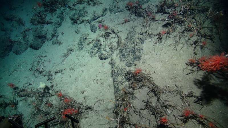 New insights into biodiversity hotspots could help protect them from potential deep-sea mining