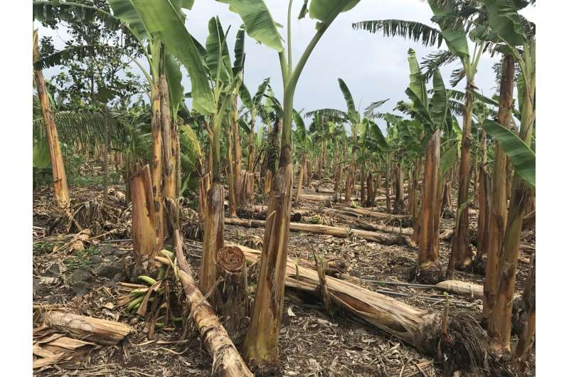 Protecting forests and people from tropical storms