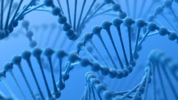 Putting the brakes on the gene drive