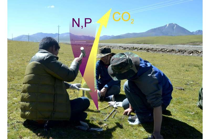 RUDN scientist: Tibetan soil enrichment with nitrogen and phosphorus leads to carbon loss