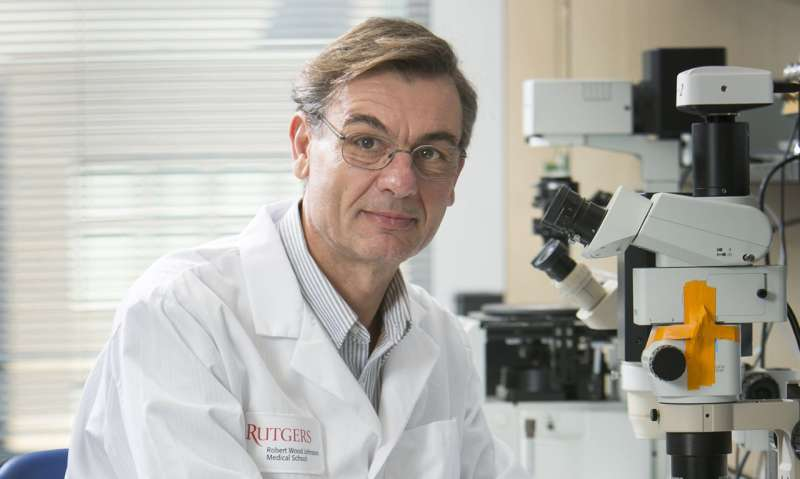 Rutgers researchers discover possible cause for Alzheimer's and traumatic brain injury