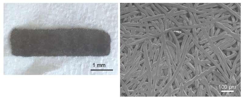 Scientists successfully test new, safer titanium plate for bone tissue repair